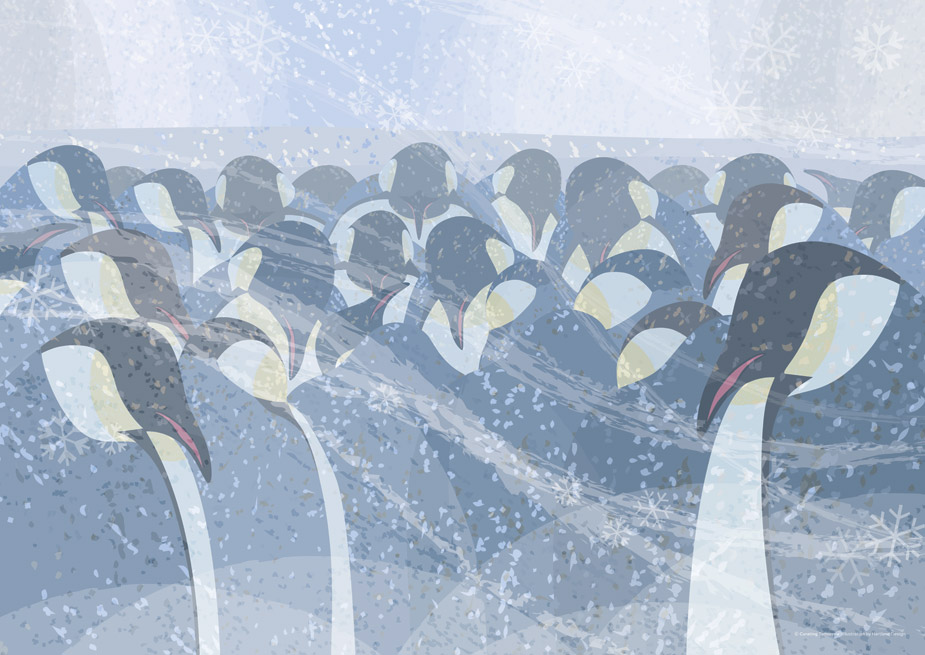 Emperor Penguins - © Curating Tomorrow