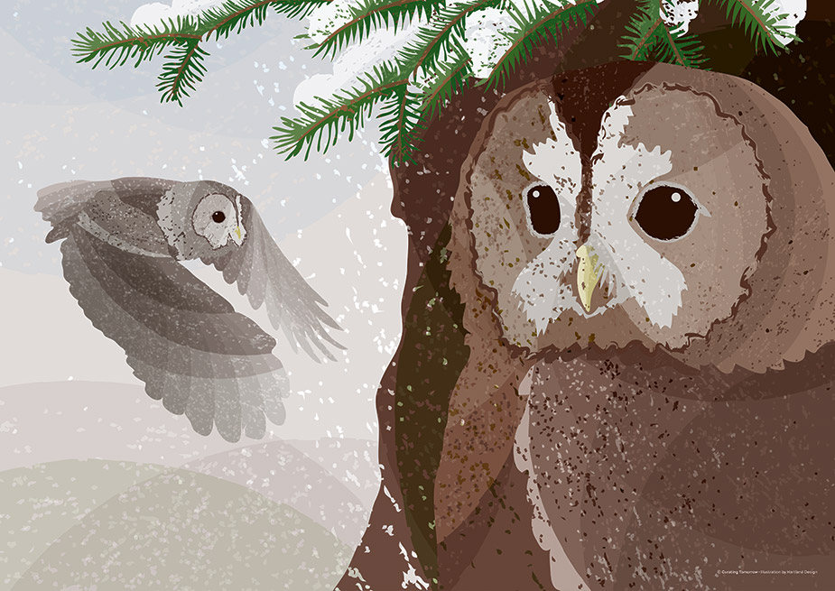 Tawny Owls - © Curating Tomorrow